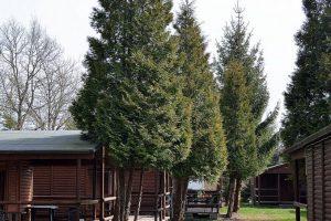 domki kwiecienDSC_6907