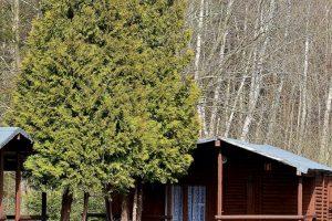 domki kwiecienDSC_6995